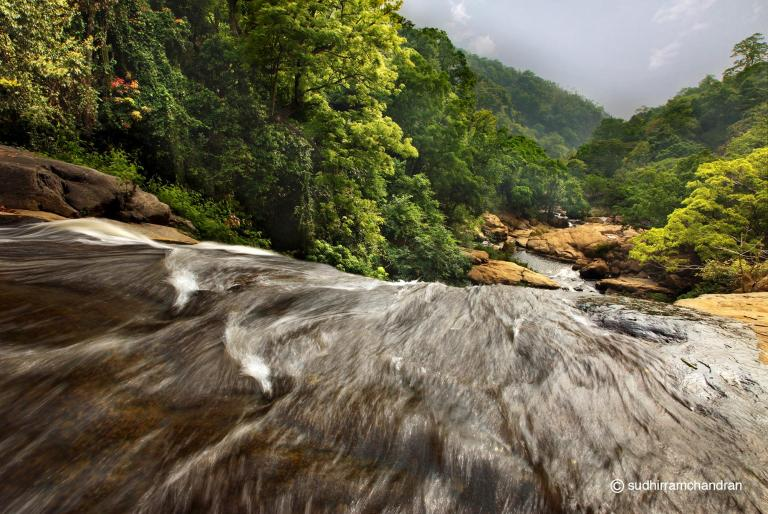 An amazing shot of nature in the interiors of The Nilgiris by photographer Sudhir Ramchandran