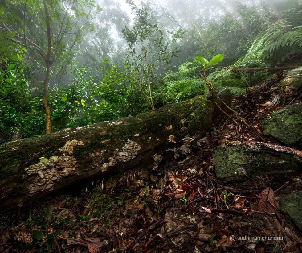 The undergrowth in the dense forests of the Nilgiris, by photographer Sudhir Ramchandran